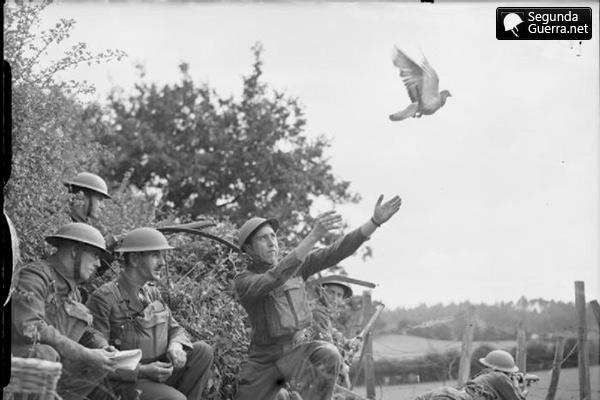 tropas britânicas lançar um pombo correio, em agosto de 1940.